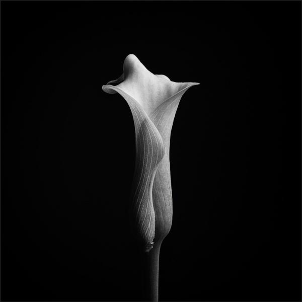 Sensuality by Nick_w
