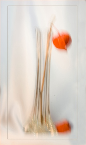 vase & physalis by maywee