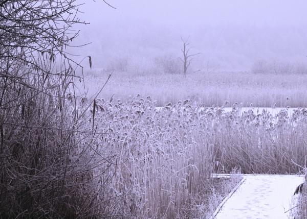 Winters Morning by mickyr