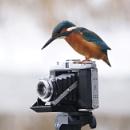 Watch the birdy