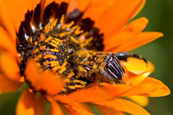 Spot the beetle by Msalicat