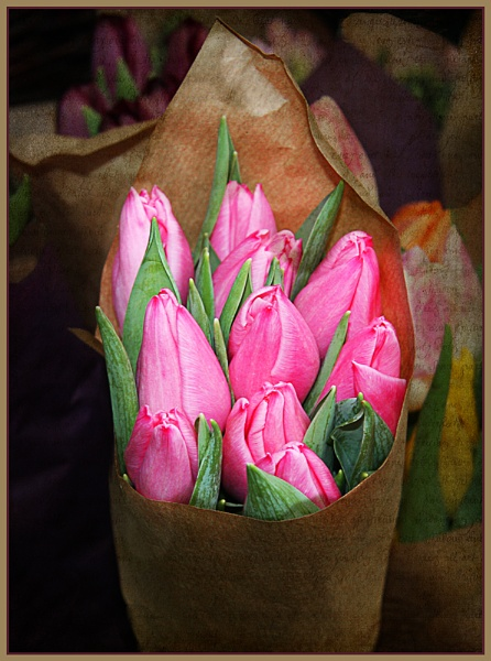 Tulips for Sale by Irishkate