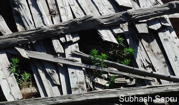 Roof by Subhashsapru