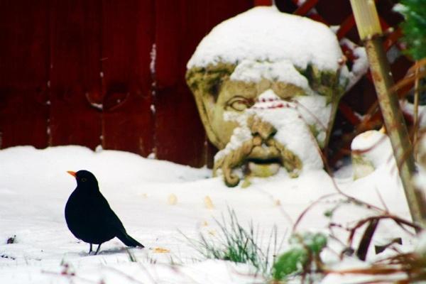 Snowy garden by BevRice