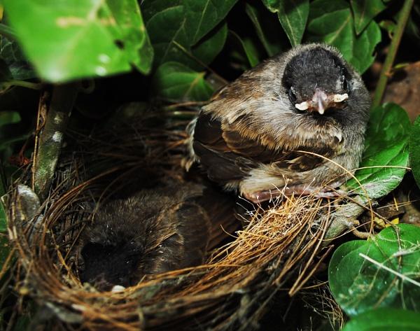 Baby Bird by prabhuv