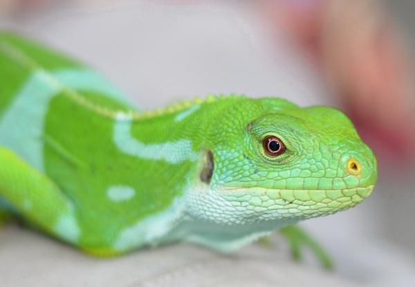 lizard by sooty_59