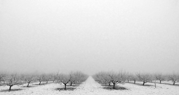 winter Orchard by AlexandraSD