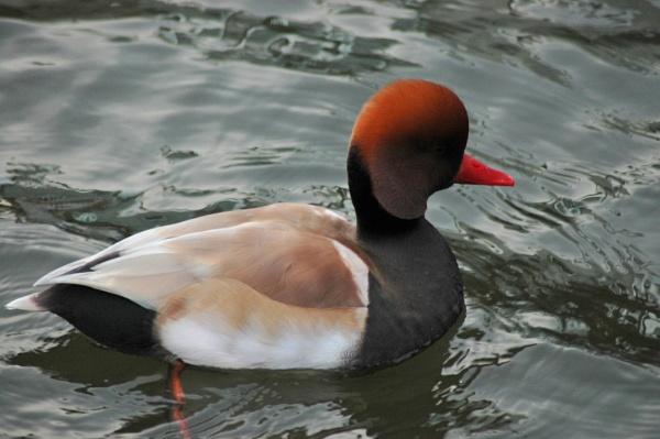 another bird by gazlowe