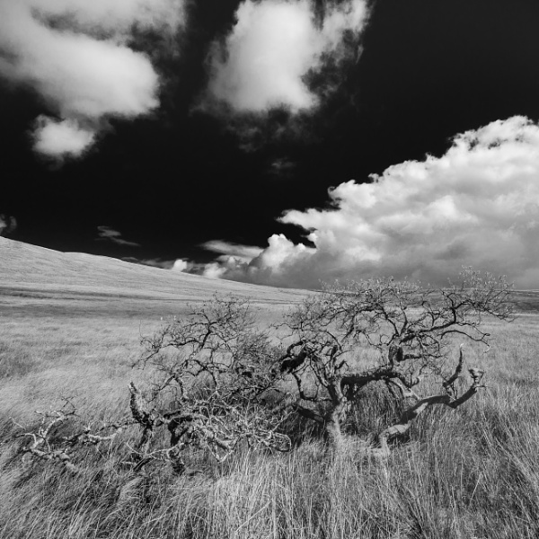 Windswept Tree by Andyphotography