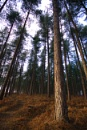 Cannock Forest by LJSThomas