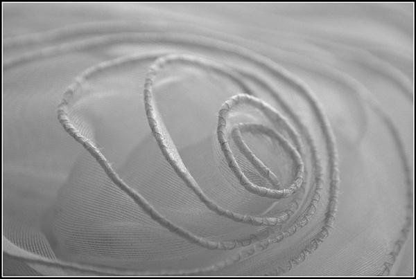 Swirl! by aniamoore