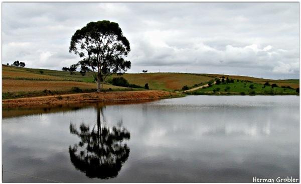 Farm Dam by Hermanus