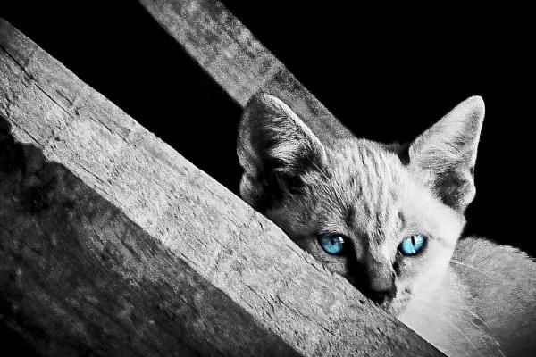 Blue eyes... by ManCorMac