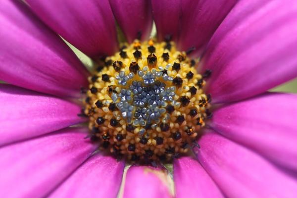 Blue flowers inside the purple flower by Emma94