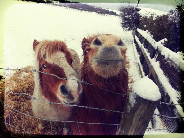Sandy&Sally...2013 Snow! by megan99
