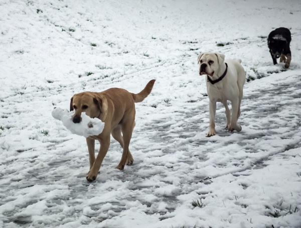Dogs by Bingsblueprint