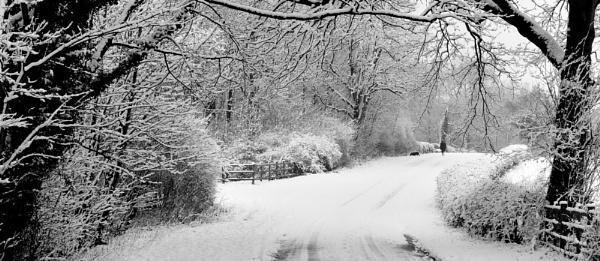 A winter walk by MomentsInTime