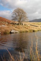 Llyn Dywarchen, Snowdonia