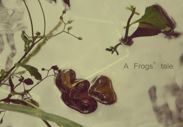 a frogs tale by 1498