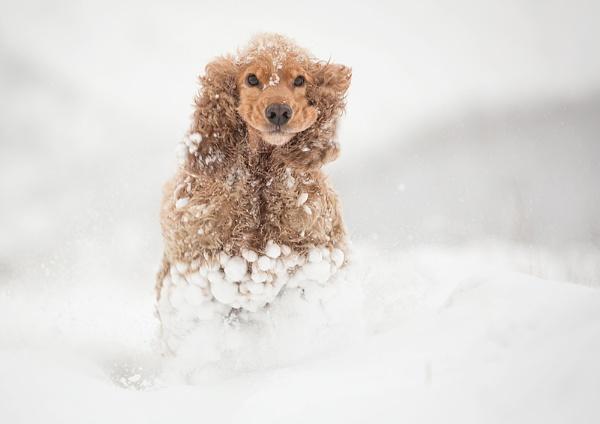 I Love Snow!!!