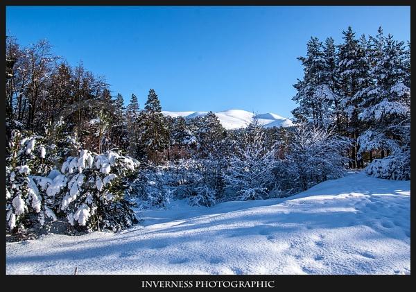 Cairngorms Winter Wonderland by jjmills