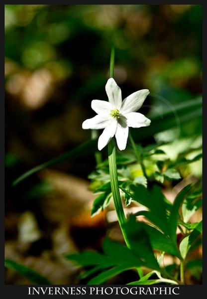 Last Bloom by jjmills