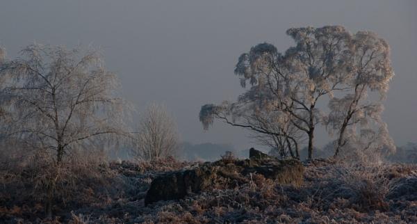 Winter wonderland by Gazzten