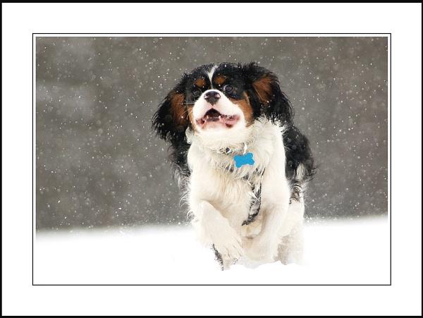 Let it snow..... by phil_j