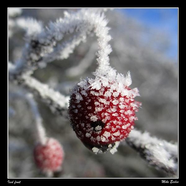 Iced fruit by oldgreyheron