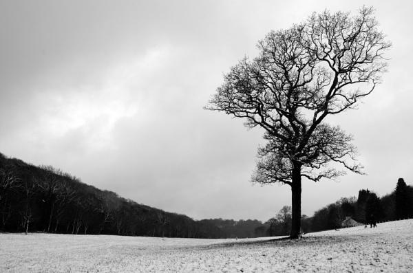 Snow fall by cymroDan