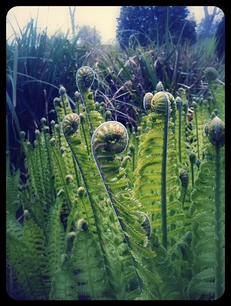 Nature unfurling by ohlavache