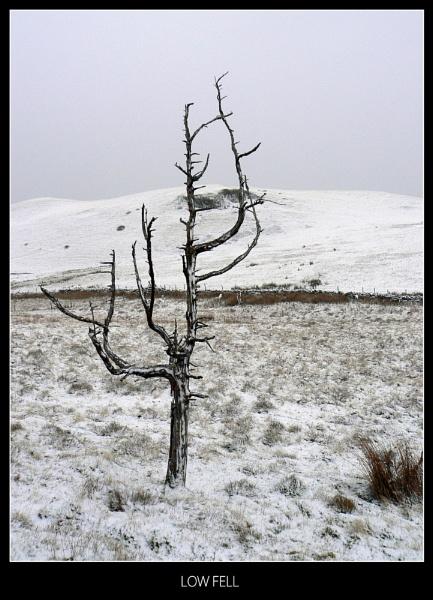 Low Fell by jimmy-walton