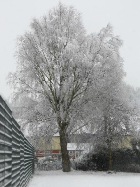 Snowy Tree by KatieMariePhotos