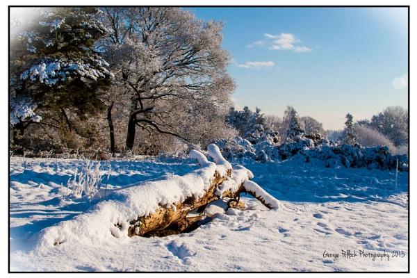 Wintery Walk by airfreq