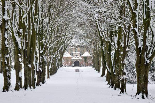 Snowy Avenue by NippyN