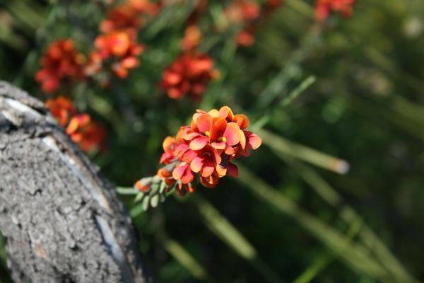Wildflower by Brindamour