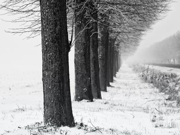 Snow lines by mlseawell