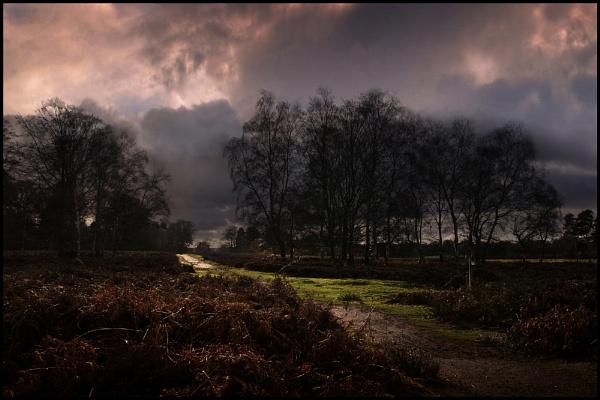 Afternoon Stroll. by Niknut