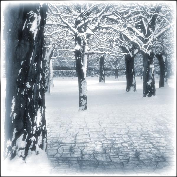 Darned Crazy Snow ?? by Niknut