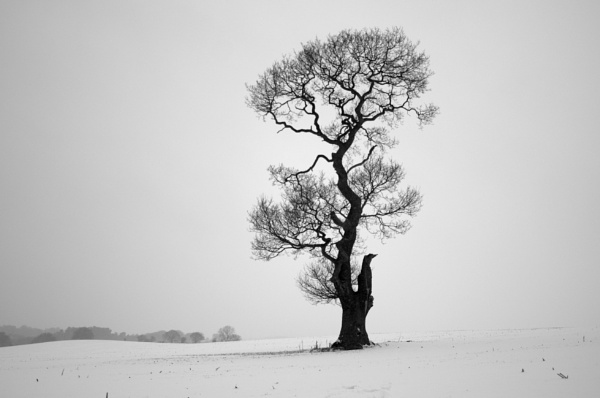 a winters tree by soulsharer