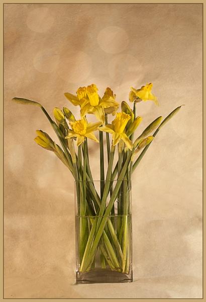 Soon be Spring by Irishkate