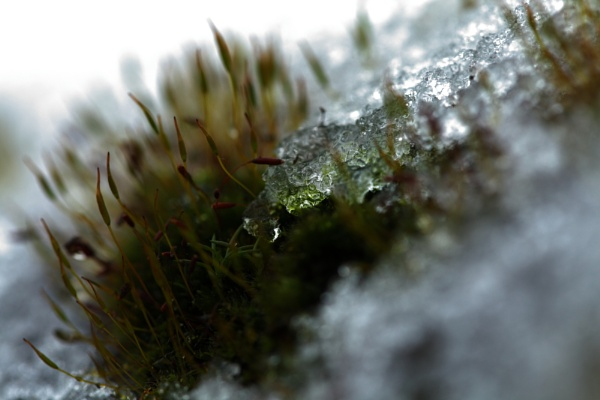 Moss and ice by pdcche