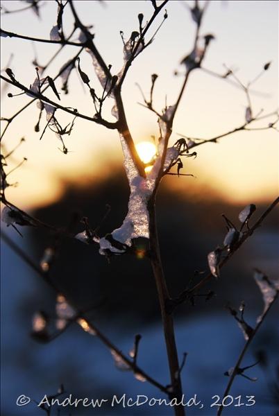 Sunrise Ice by andymcdonald