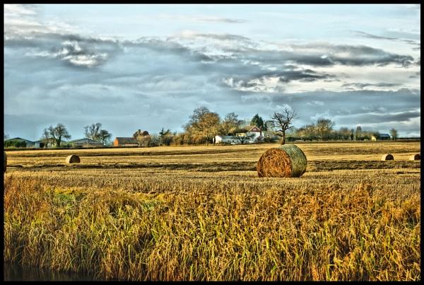 December Field