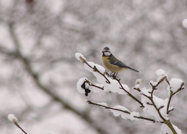 winter time by bertie1983