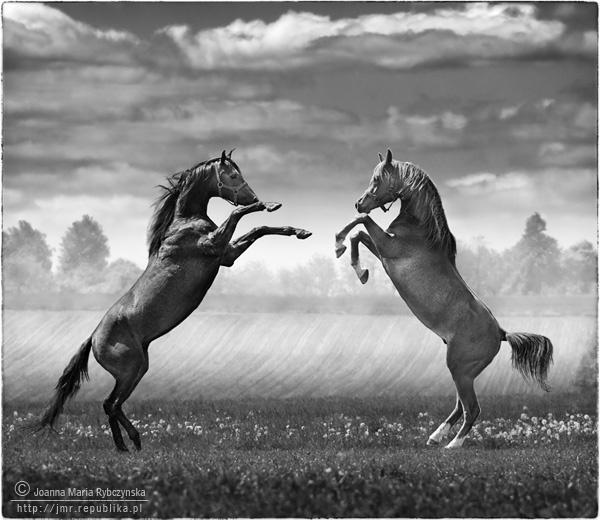Dancing Horses [BW] by missmoon
