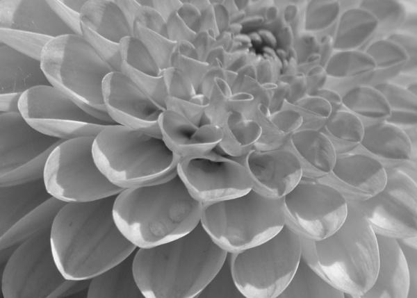 Petal Pattern by Lottiephotography