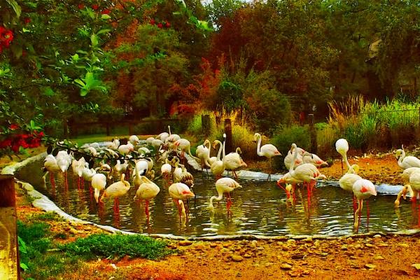 Flamingók by wacrizphoto