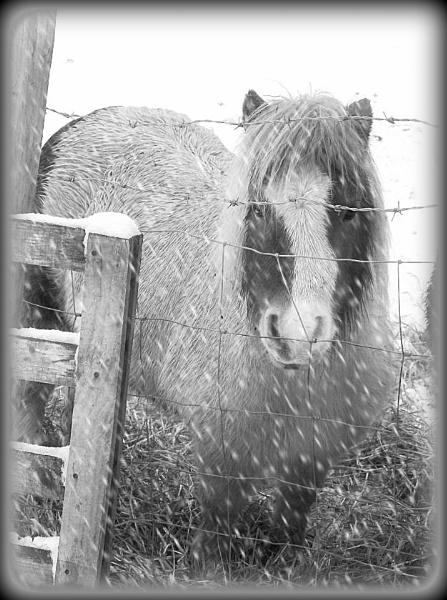 sally! blizzarding snow by megan99