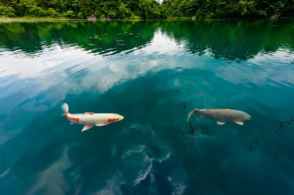 Swim in the sky by TeruoAraya